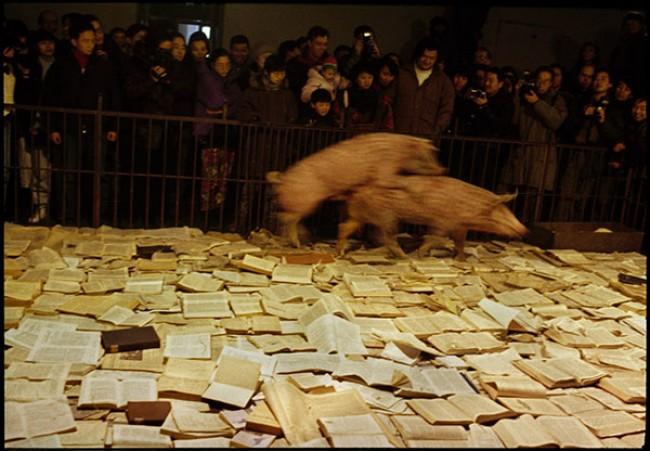 Kulturalne zwierzę, Studium przypadku przekazu kulturowego iStudium przypadku przekazu kulturowego2